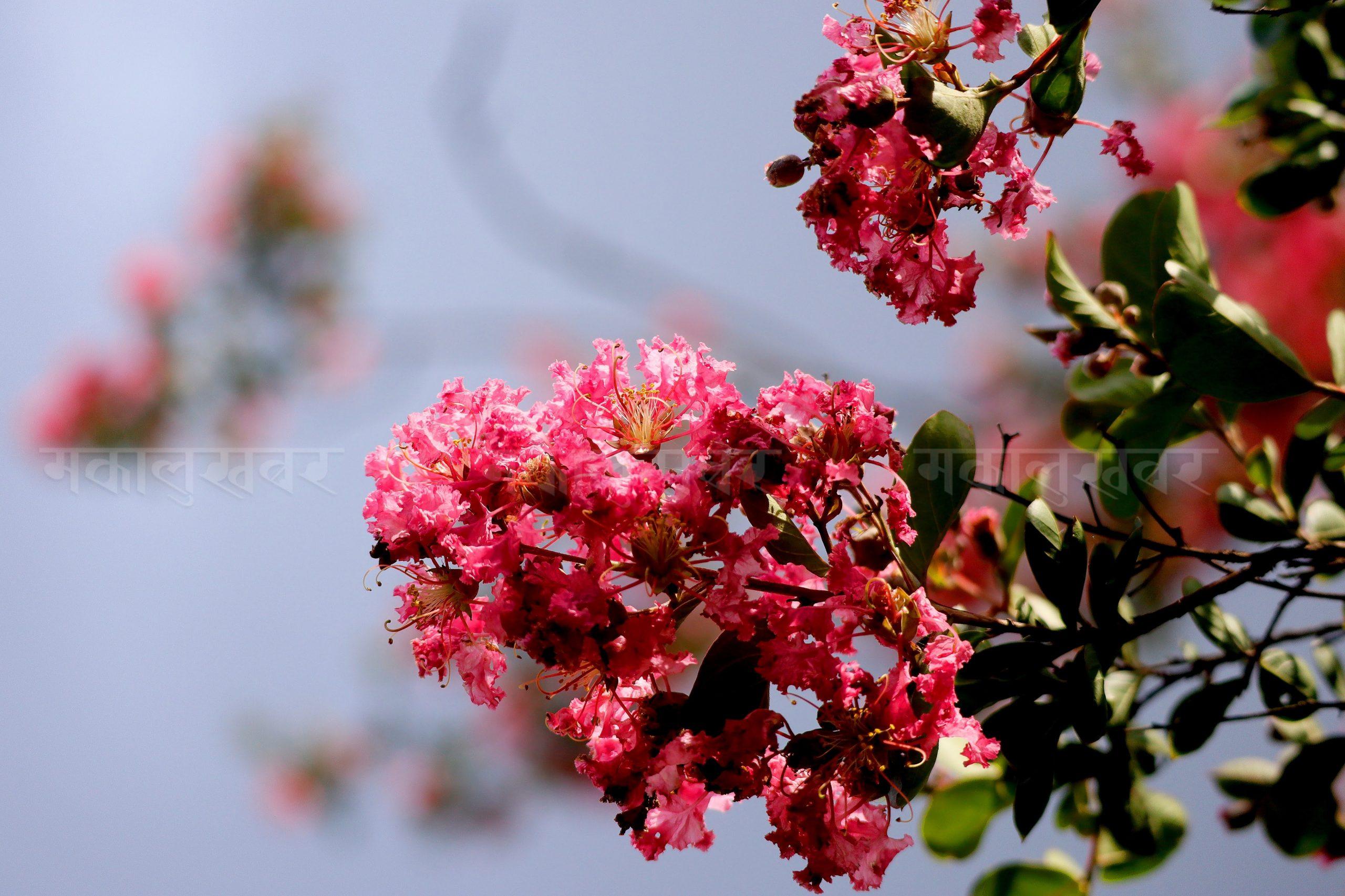 आहा ! असारे फूल (फोटोफिचर)