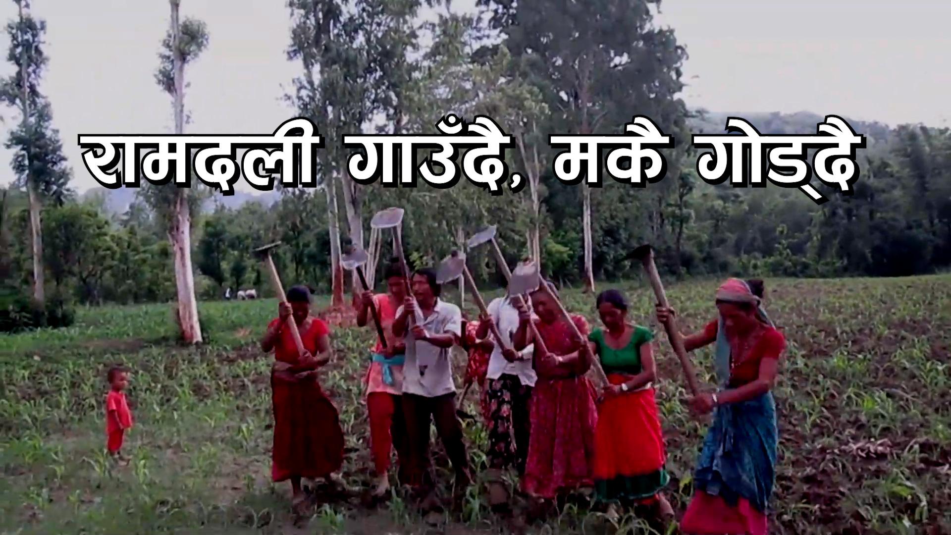 रामदली गाउँदै, मकै गोड्दै [भिडियो]