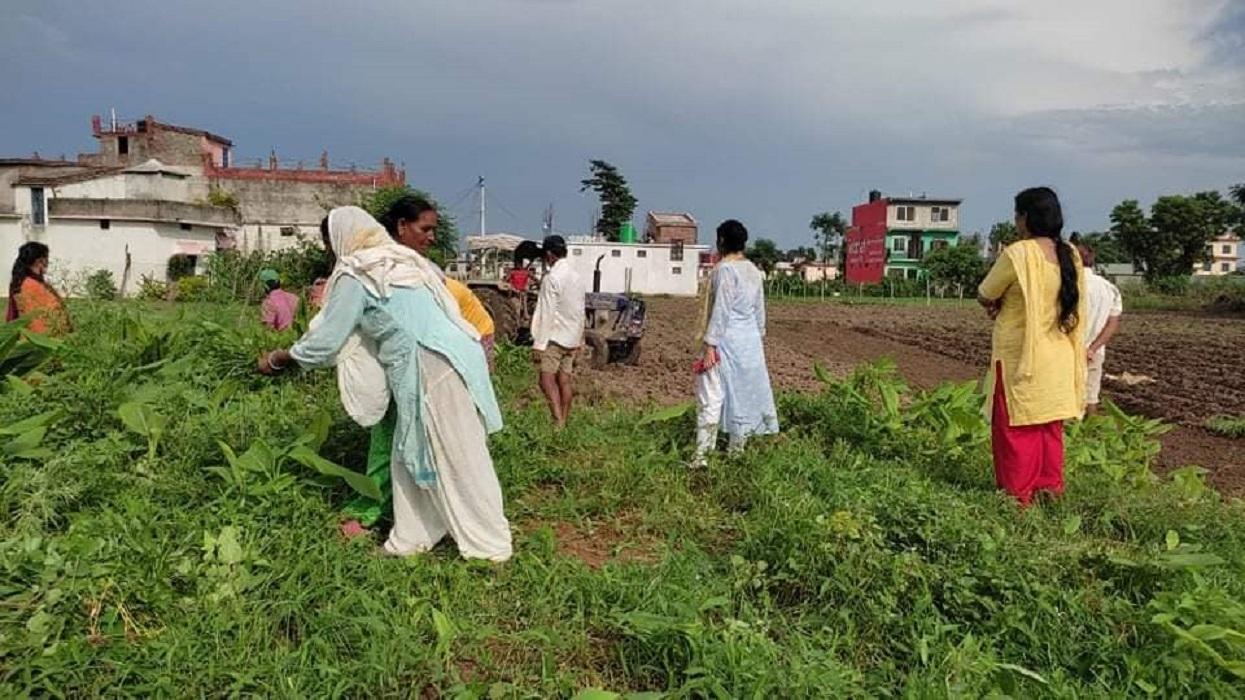 एकल महिलाले थाले सामूहिक बेसार खेती' उद्योग खोल्ने लक्ष्य