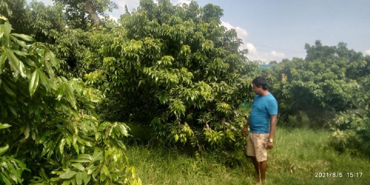 बारीमै रमाइरहेका रामचन्द्र : फलफूल खेतीदेखि प्रशोधन उद्योगसम्म