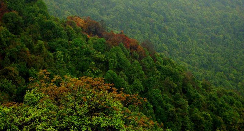 सामूदायिक वन एक, हैसियत अनेक